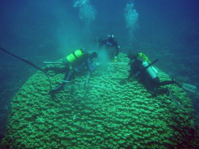 Ancient coral reef tells the history of Kenya's soil erosion
