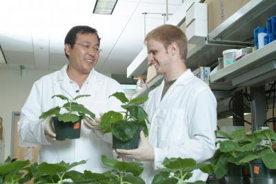 Plants provide accurate low-cost alternative for diagnosis of West Nile Virus