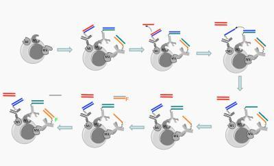 DNA nanorobots find and tag cellular targets