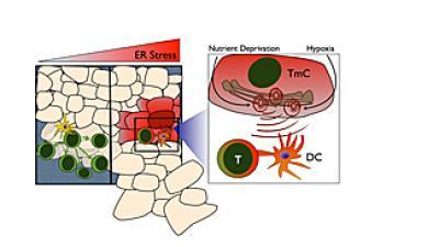 Cancer cells co-opt immune response to escape destruction