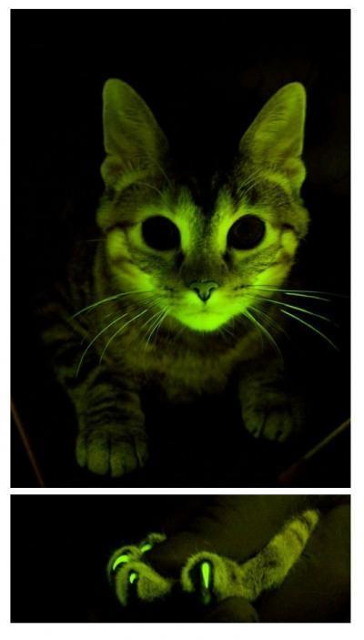 they glow!