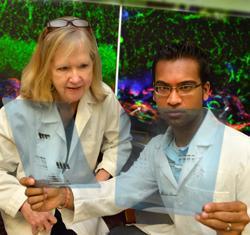 Major blood vessel gene contributes to vision loss in premature infants