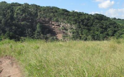 Earliest known bug-repellant plant bedding found at South African rock shelter