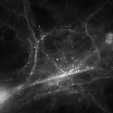Watching molecules morph into memories