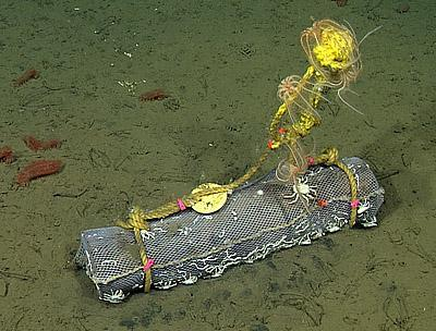 Sunken logs create new worlds for seafloor animals