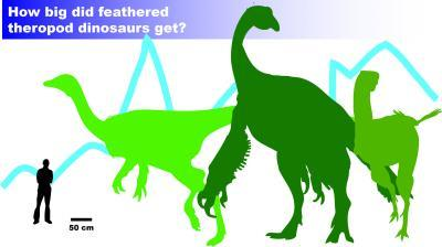 For some feathered dinosaurs, bigger not necessarily better