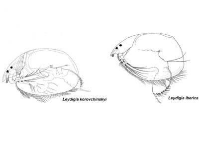 2 new crustaceans discovered in Iberian Peninsula