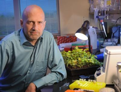 Unraveling the origin of the devastating kiwifruit bacterium