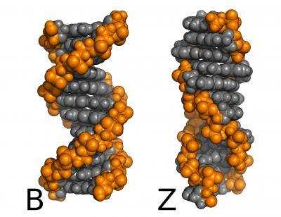 New calculations solve an old problem with DNA