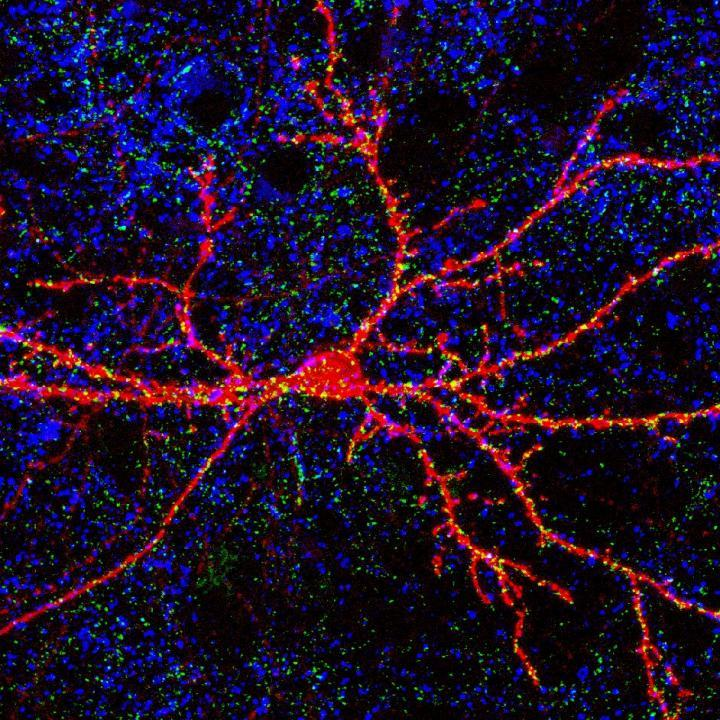 An enzyme and synaptic plasticity