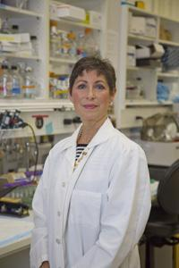 Joslin scientists discover new step in a molecular pathway responsible for birth defects