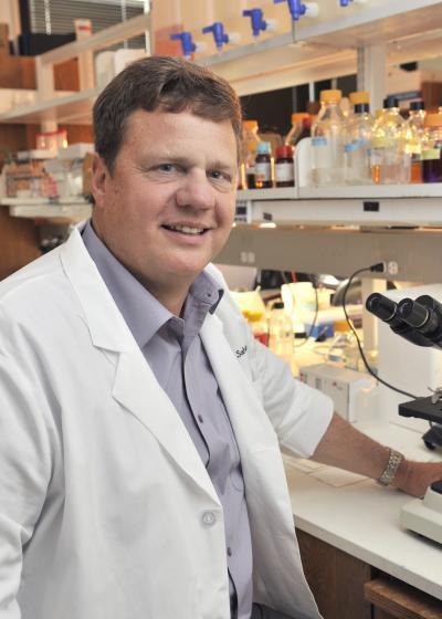 Blocking key enzyme minimizes stroke injury, UT Southwestern