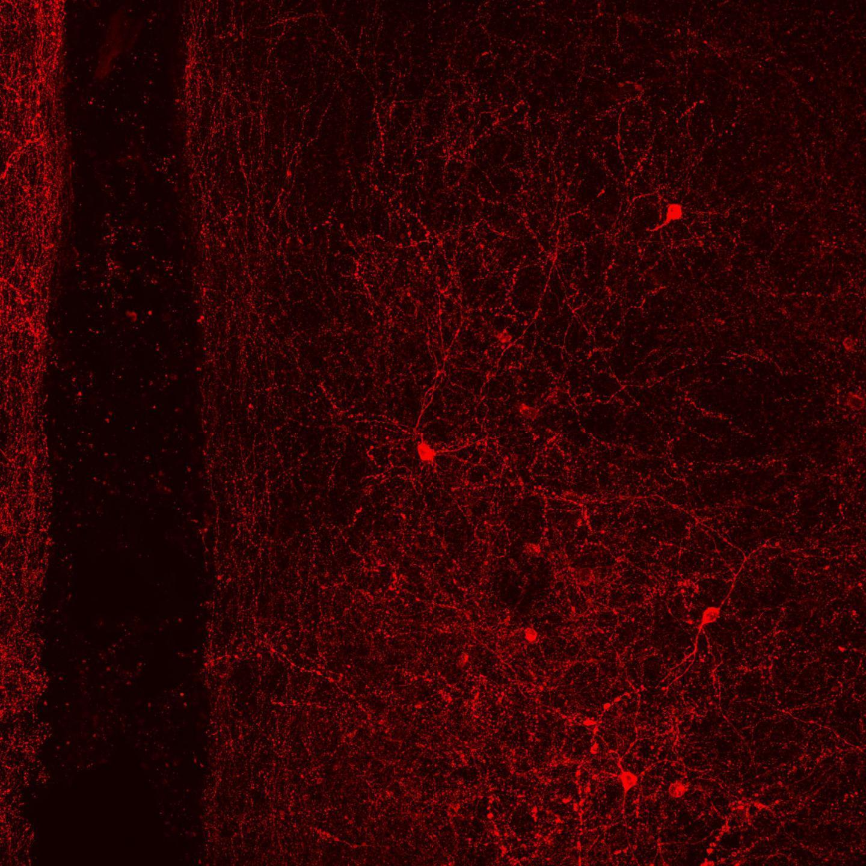 Newly discovered brain cells explain a prosocial effect of oxytocin