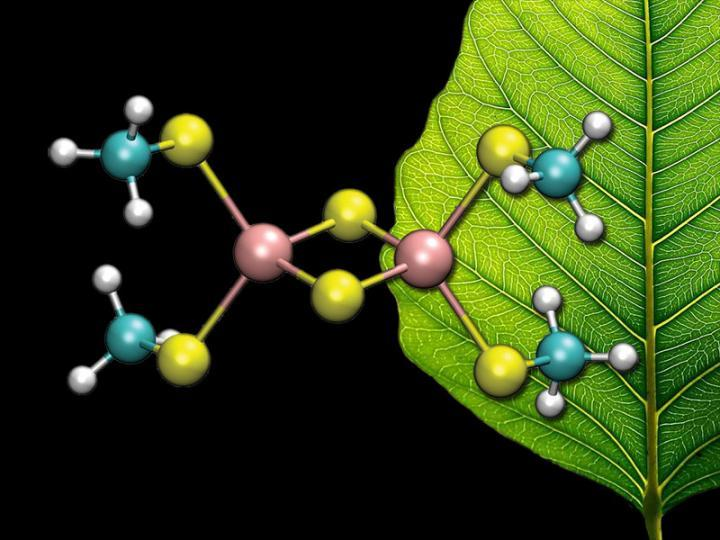 Quantum mechanical calculations reveal the hidden states of enzyme active sites
