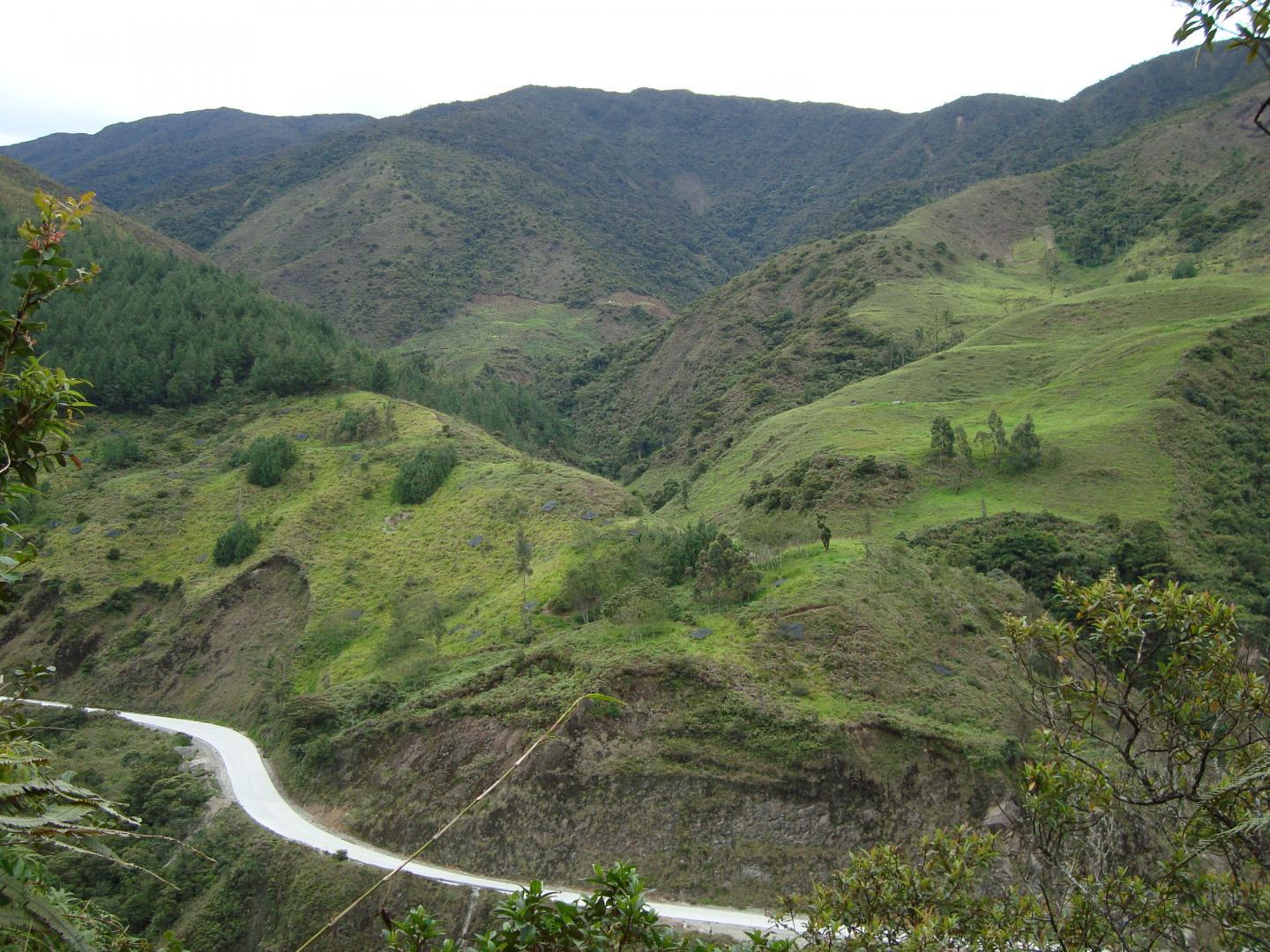 Protecting the rainforest through agriculture and forestry