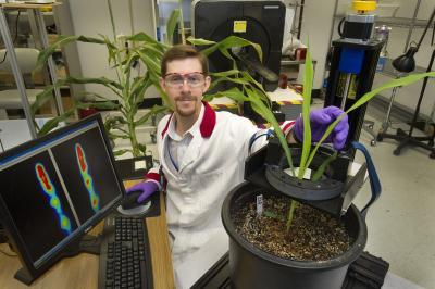 Tracking sugar movement in plants