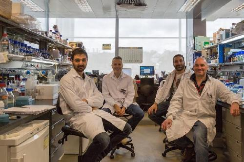 CNIC researchers identify a new signaling mechanism implicated in congenital aortic valve disease