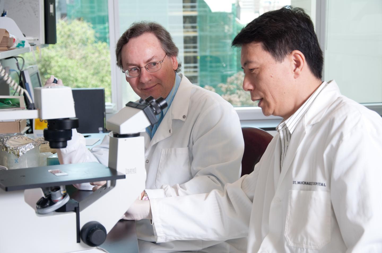 Novel type 1 diabetes treatment shown to work on human beta cells transplanted into mice