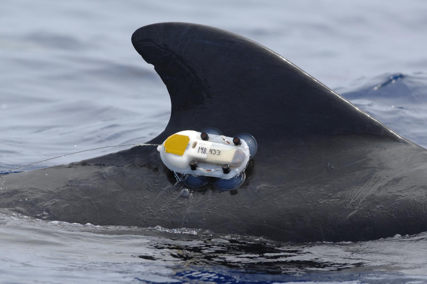 Law of the Sea authorizes animal tagging research without nations' consent
