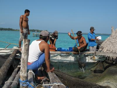 Indonesian fishing communities find balance between biodiversity and development