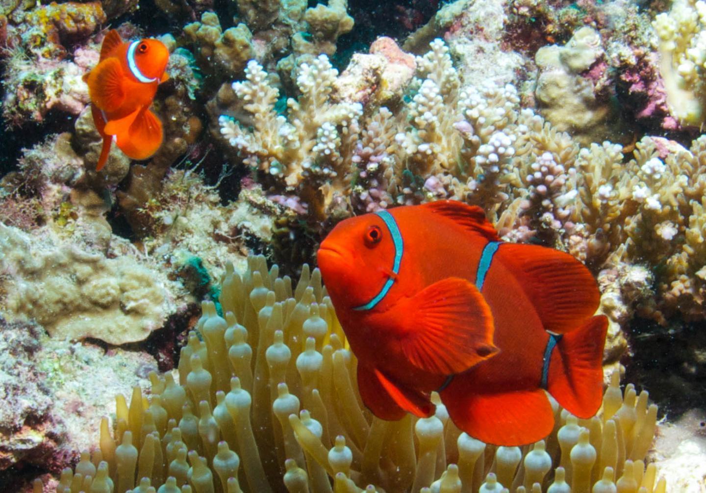 Arrested development -- Sediment wreaks havoc with fish larvae
