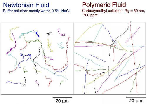 Penn researchers discover why E. coli move faster in syrup-like fluids than in water