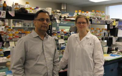 New approach for treating genetic muscle wasting disease shows promise in mice