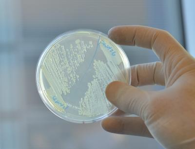 Scientists notch a win in war against antibiotic-resistant bacteria
