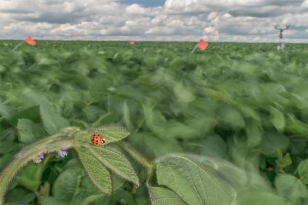 Dwindling wind may tip predator-prey balance