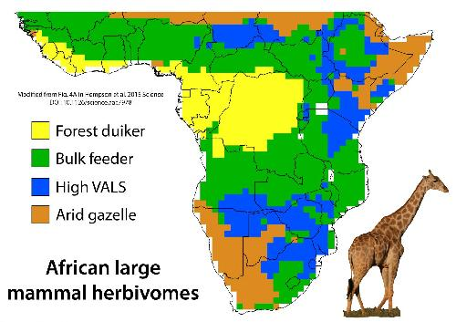 African wildlife: What it looked like 1000 years ago and why this is important