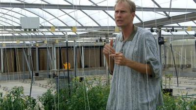Whitefly, tomato growers find truce in new Texas variety
