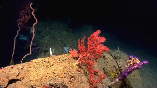 Regional workshop held to explore submarine canyons science and management