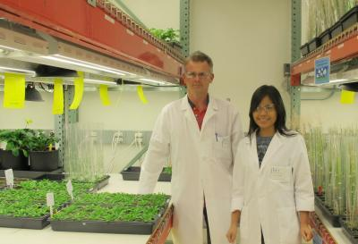 Discovery may pave way to genetically enhanced biofuel crops