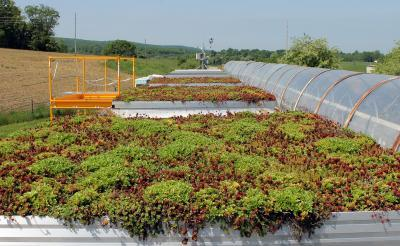 Virginia Tech architect reveals 'green roofs' need not go to great depths to work