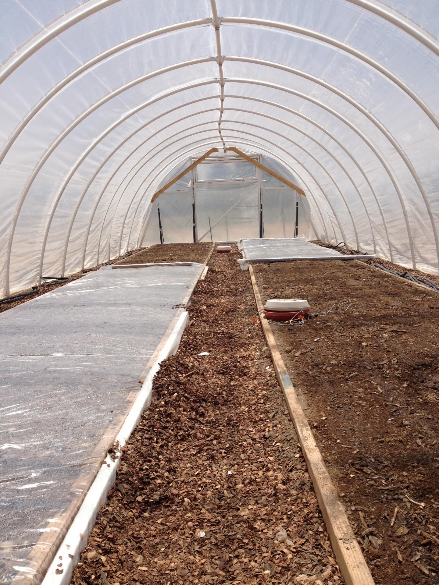 Polyethylene mulch, glazing create optimal conditions for soil solarization