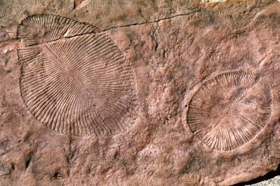 Ancient Australian fossils were on land, not at sea, geologist proposes