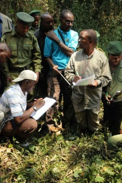 Law enforcement vital for great ape survival
