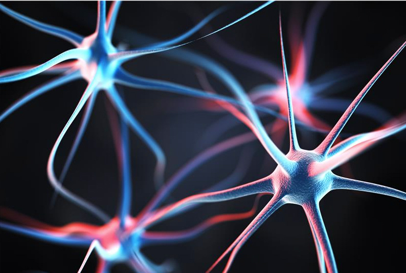 How schizophrenia risk gene DISC1 affects the brain