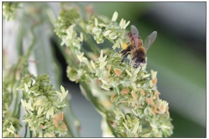 Positive Correlation Between Bee Health and Conventional Agriculture