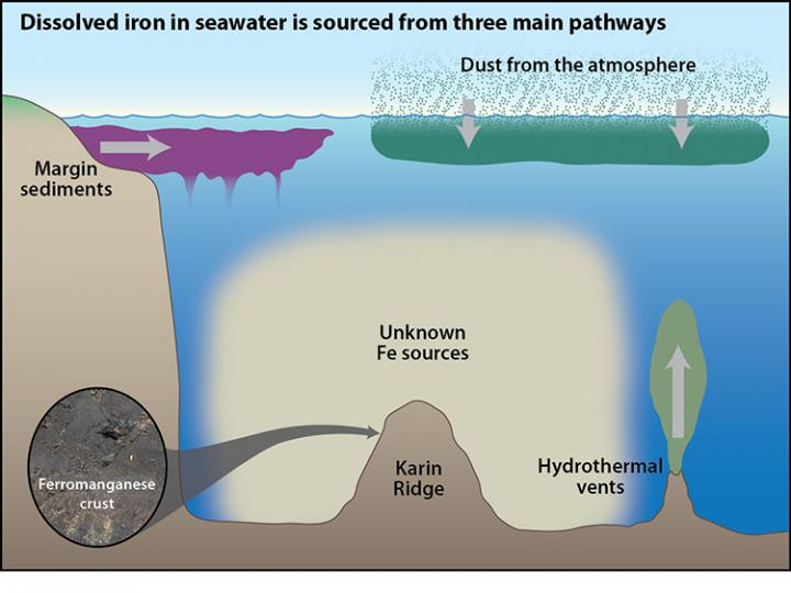 a study on iron enhancement of marine phytoplankton Vious field studies reported that iron concentrations in sea ice can be 1 or 2   effects of sea ice iron on marine ecosystems are enhanced.
