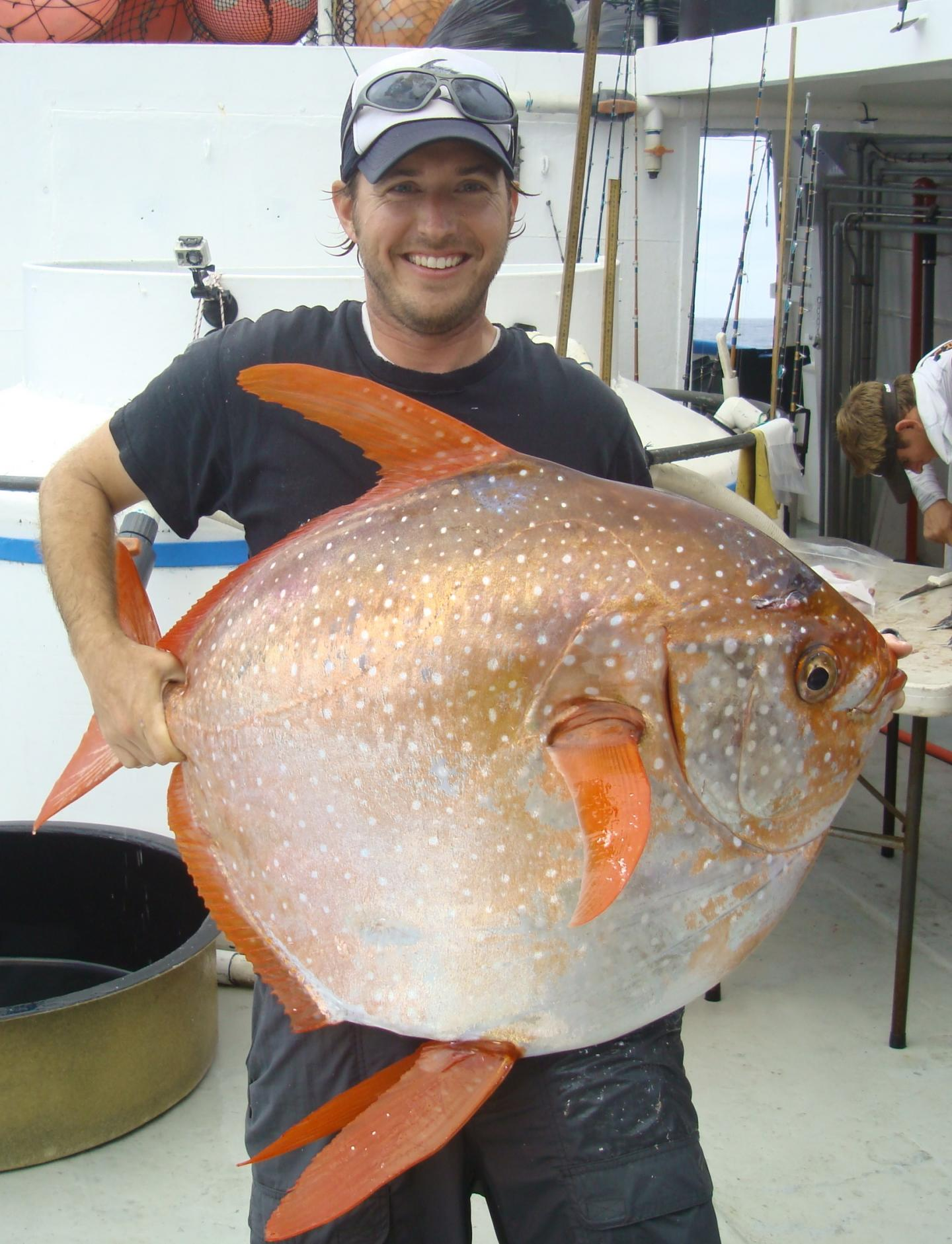 First warm-blooded fish