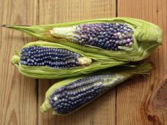 Blue and purple corn: Activists may not like it, but it could be the future of natural colors