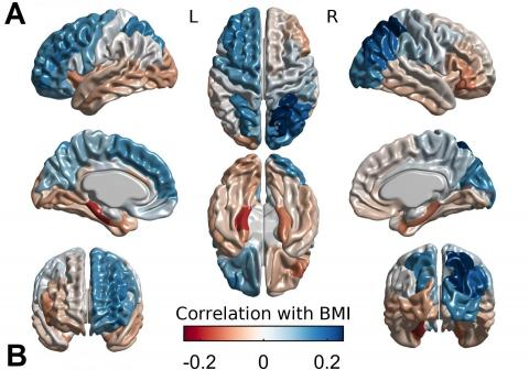 The Link Between Obesity The Brain And Genetics Science Codex